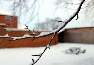 Snowy February Tuesday