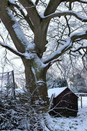 Snow fall early February