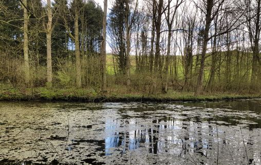 Hidden lake and reflections, Lincolnshire Wolds