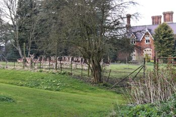 Deer at Cuxwold Hall