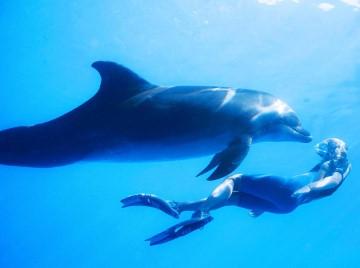 halfbananas-dolphin-image