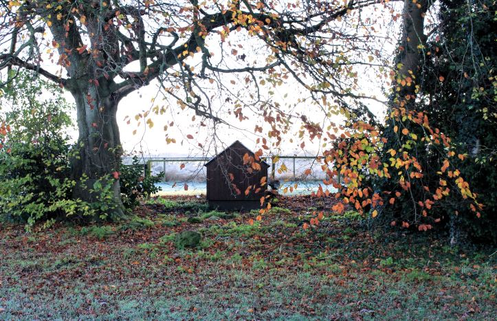 Chicken coop under the almost bare beech tree
