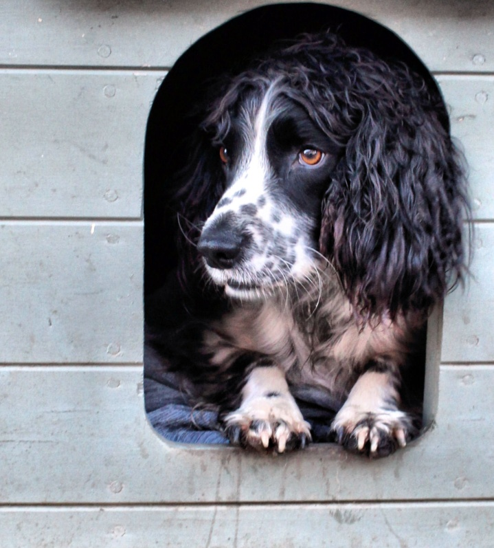 Alf on the lookout in his kennel