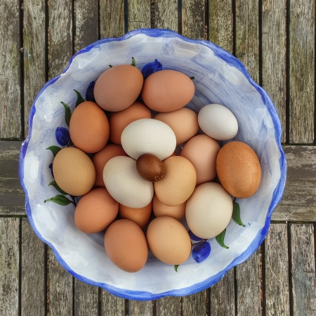 Fairy egg in bowl of chicken eggs