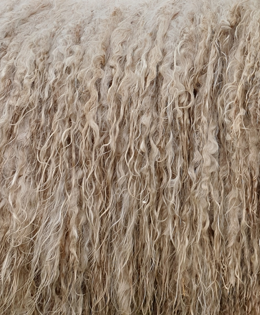 Lincoln Longwool fleece